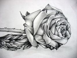Graphite Rose by M-Shisaru