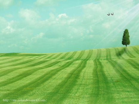 pure field by my-color