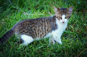 Striped Cutie by PhotographicCrypto