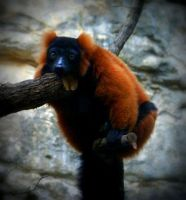 Lazy as a lemur... by Chareese
