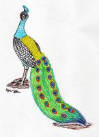 Peafowl / Peacock Colorful Line Art ~~COMMISSION~~ by EyonSplicer