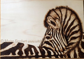 Woodburning zebra  by WitchiArt