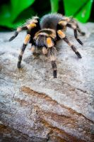 mr smithi 3 by biggoofybastard