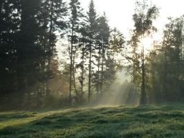 Enlighted Meadow 5 by SelvaStock
