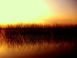 THE REEDS by meefro683