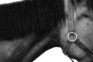 Horse II by odpium
