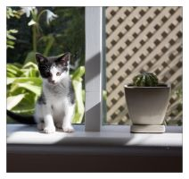 Cat and Cactus by WiseWanderer