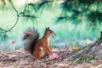 squirrel by markotapio