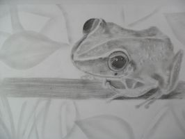 Coqui Frog by TERRIBLEart
