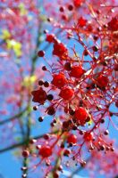 Bell Berries by ShortAndSnappy