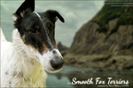 Smooth-Fox-Terrier by FamousShamus109