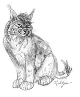 Bobcat-Lynx Sketch by Foxfeather248