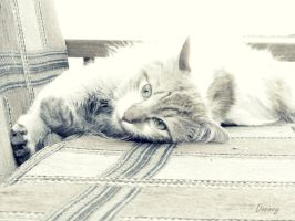 Another Cat by Donyle