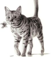 Domestic Bengal Cat Dessin by Jagroar