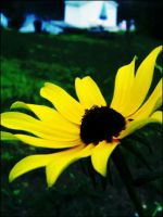 yellowness by caiticat