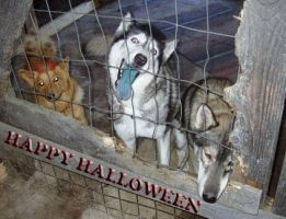 Halloween dogs by Chazar
