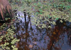 Trees Reflected in Water by tobilou
