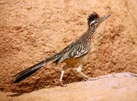 Roadrunner 8335 by mammothhunter
