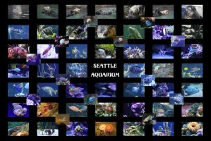 Seattle Aquarium Massive Montage by swashbuckler