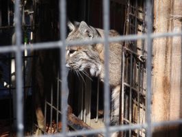 Folsom City Zoo Photo Series13 by lilly-peacecraft