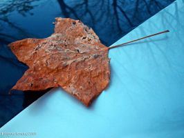 ' Old leaf ' by MWPHOTO