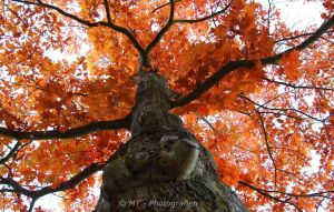 The autumn shows its most beautiful pages 9 by MT-Photografien