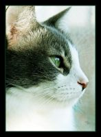 Kit for Cat by TeaPhotography