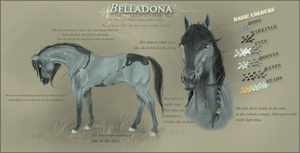 Belladona Ref sheet by Cabelz