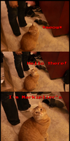 Markiplier's kitty :3 by SteffieNeko