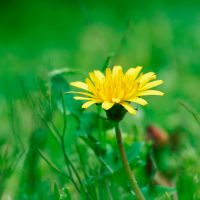 yellow flower by dyefish