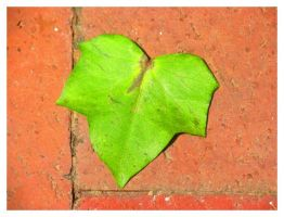 Ivy leave over the brick by ccordovez