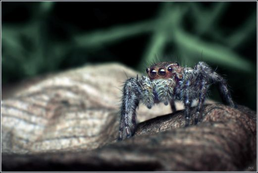 Little spider in the jungle by OshimaruKung7285