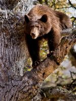 Black Bear 2 by sjbvrsn