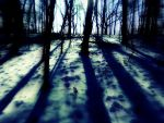 Spooky Winter Forest by RANDALL909