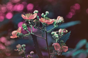 Strangeness by TigresSinai