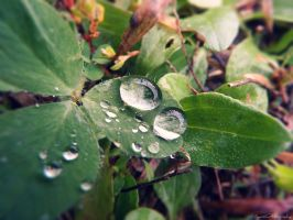 Rain Droplets. by Sparkle-Photography