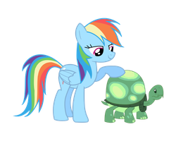 Rainbow Dash and Tank Vector by Brookreed