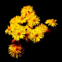 Yellow Weed by nectar666
