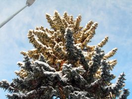 Up a tree with snow gloves by Creativeness