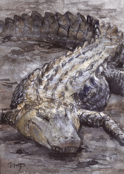 aceo alligator - for chayt by kailavmp