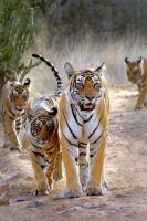 The Royal Family by xpress2gaurav