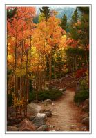Aspen Trail by Legioner