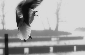 Je gull by organicvision