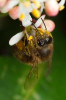 Feeding Honey Bee by Alliec