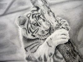 White tiger by laviathin777