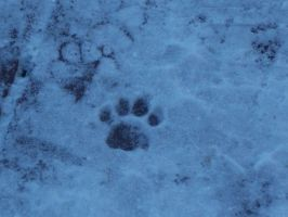 single paw in the snow by Waterchan000