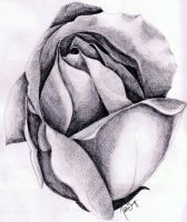 Once Upon A Rose by HTHI