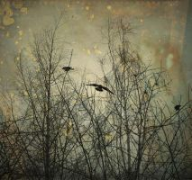birds in trees by lafaette