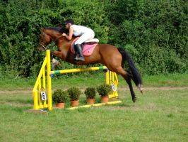 3ft3 Plant Pot Fillers Unaffliated Showjumping by StarCrossedPsycho