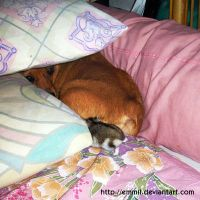May I come in? by emmil